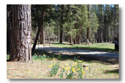Cabin #2B Quail Meadow Vacation Rental in Yosemite - RedAwning